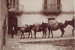 casa_Domenico_di_Rienzo-339